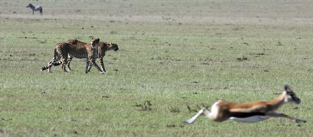 http://www.mittafrika.net/wp-content/uploads/2011/09/afrika320.jpg