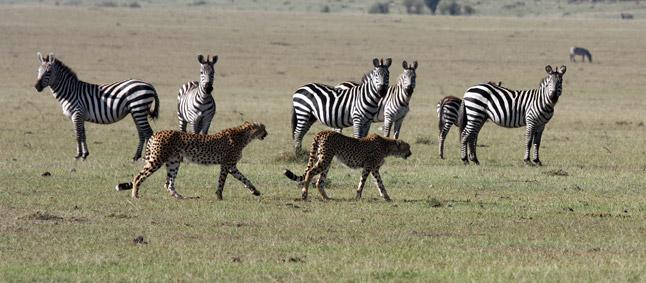 http://www.mittafrika.net/wp-content/uploads/2011/09/afrika330.jpg