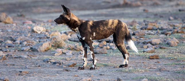 http://www.mittafrika.net/wp-content/uploads/2011/09/afrika340.jpg