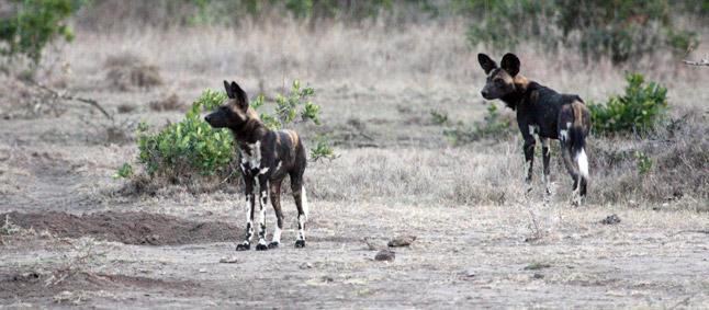 http://www.mittafrika.net/wp-content/uploads/2011/09/afrika350.jpg