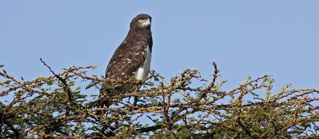 http://www.mittafrika.net/wp-content/uploads/2011/09/afrika360.jpg