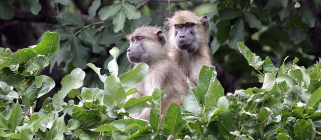 http://www.mittafrika.net/wp-content/uploads/2011/09/afrika370.jpg