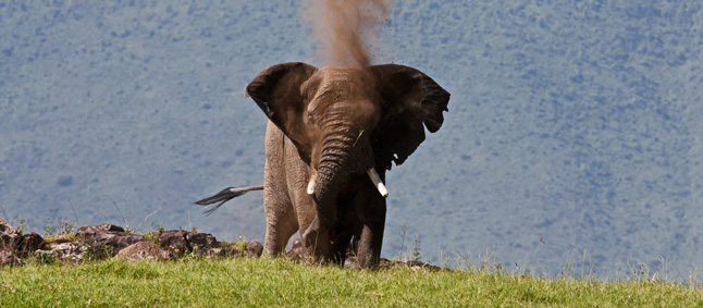 http://www.mittafrika.net/wp-content/uploads/2012/02/IMG_2488_elephant_ngoron.jpg