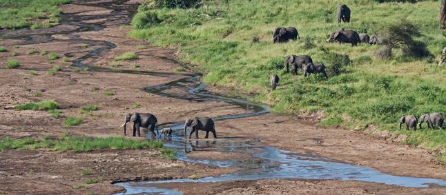 http://www.mittafrika.net/wp-content/uploads/2012/02/IMG_2588_eleph_tarang_646.jpg