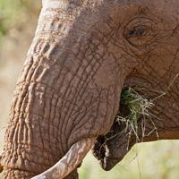 IMG_4238_elephant_200