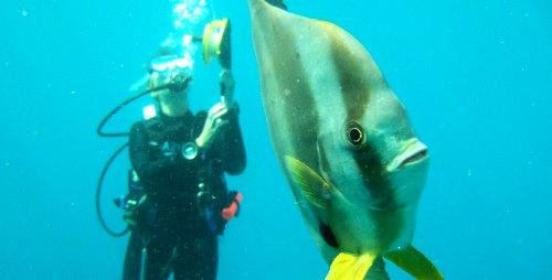 diving_500