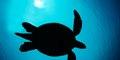turtle_120